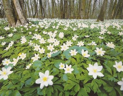 Le beau jardin des astuces pour bien conserver et soigner for Jardin japonais plantes couvre sol