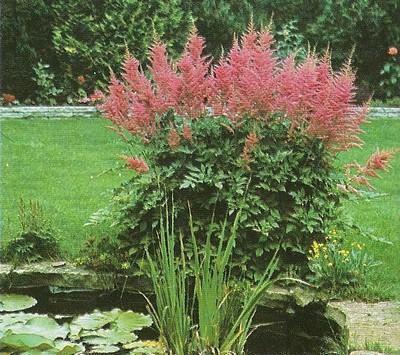 Le beau jardin des astuces pour bien conserver et soigner for Jardin fleurs vivaces