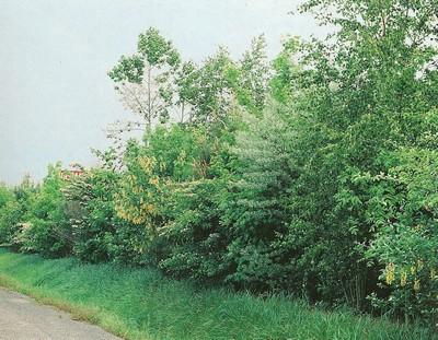 Le beau jardin des astuces pour bien conserver et soigner for Brise vent jardin