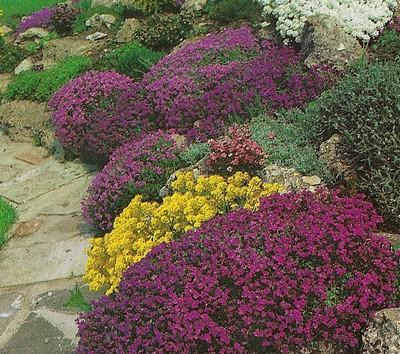 Collection de 20 plantes vivaces quot sp ciial terrain for Prix plantes vivaces