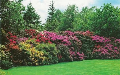 Le beau jardin des astuces pour bien conserver et soigner vos plantations - Faut il tailler les hortensias ...