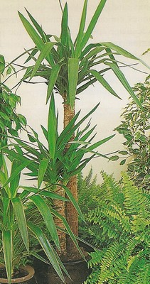 Le beau jardin des astuces pour bien conserver et soigner for Yucca exterieur