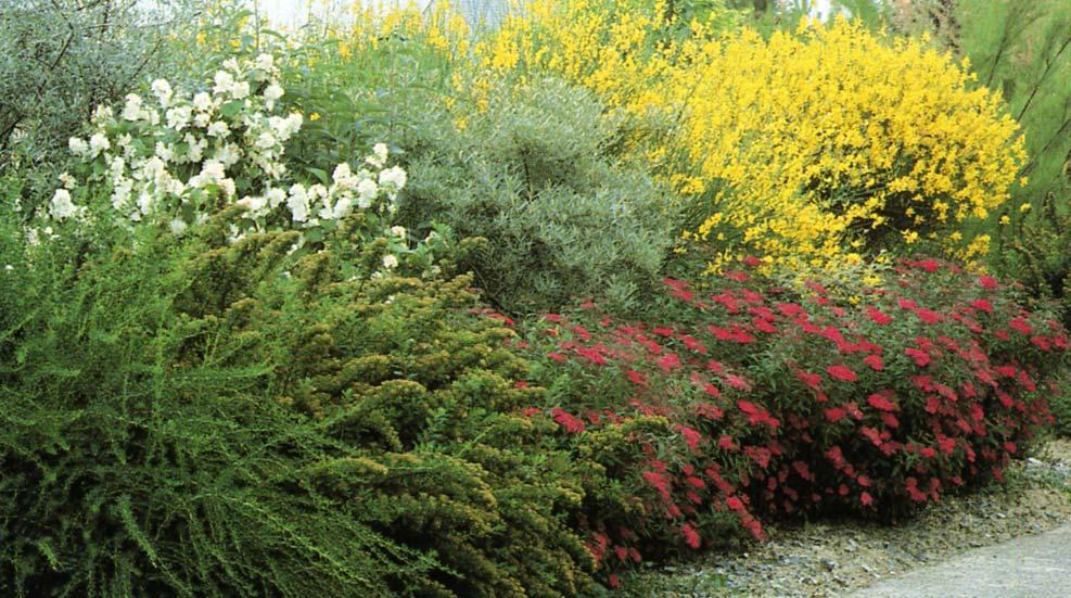 Le beau jardin des astuces pour bien conserver et soigner vos