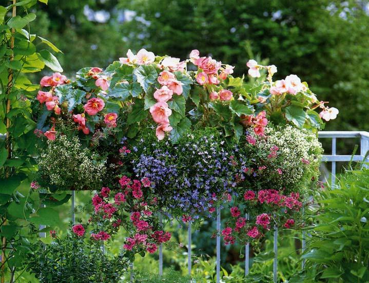 Plantes vivaces et annuelles for Plantes fleurs et jardins