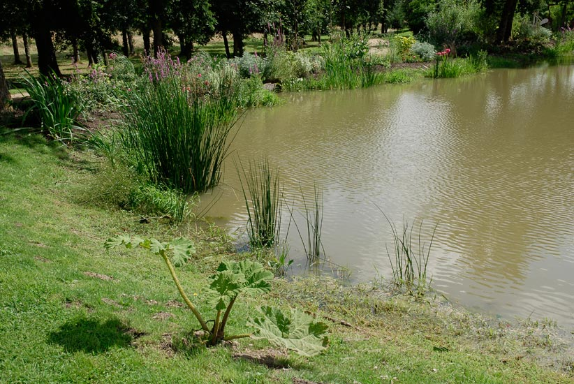 Design bassin plantes aquatiques 19 tours tours for Plante aquatique bassin exterieur