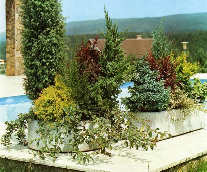 le beau jardin des astuces pour bien conserver et soigner. Black Bedroom Furniture Sets. Home Design Ideas