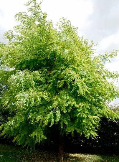 Le beau jardin des astuces pour bien conserver et soigner vos plantations - Arbre ornemental feuillage persistant ...