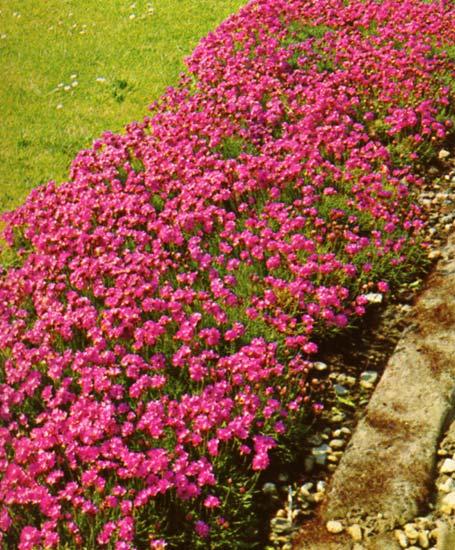 Le beau jardin des astuces pour bien conserver et soigner for Plante fleurie exterieur vivace