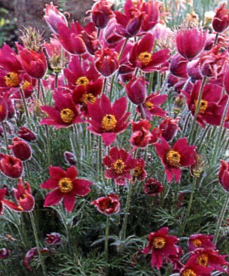 Le beau jardin des astuces pour bien conserver et soigner for Plantes et fleurs vivaces