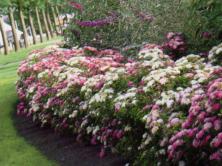 Le beau jardin des astuces pour bien conserver et soigner for Plante fleurie de jardin