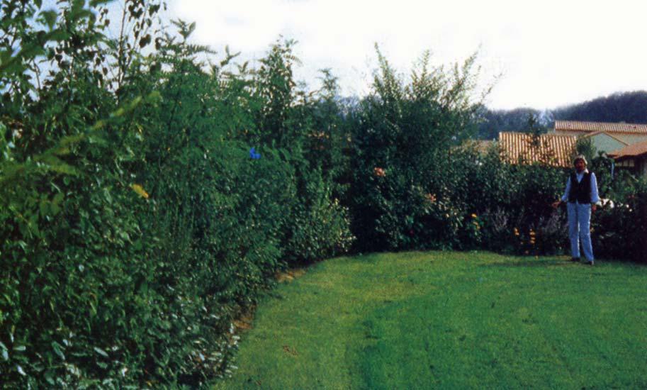 Le beau jardin des astuces pour bien conserver et soigner vos plantations - Haie champetre persistant ...