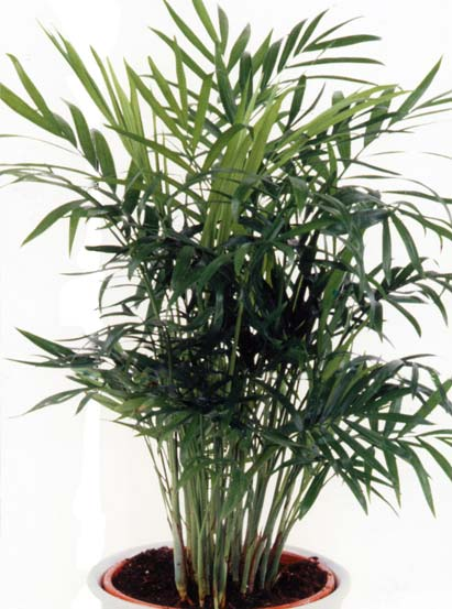Le beau jardin des astuces pour bien conserver et soigner for Plante appartement